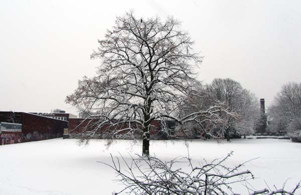 A tree surrounded by snow in the middle of Stirchley Park