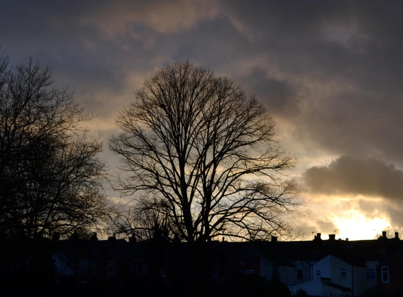 Tree against a dark sky in Stirchley Park