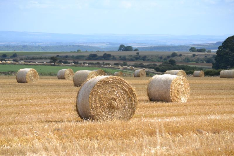 Farm near Rievaulx at harvest time
