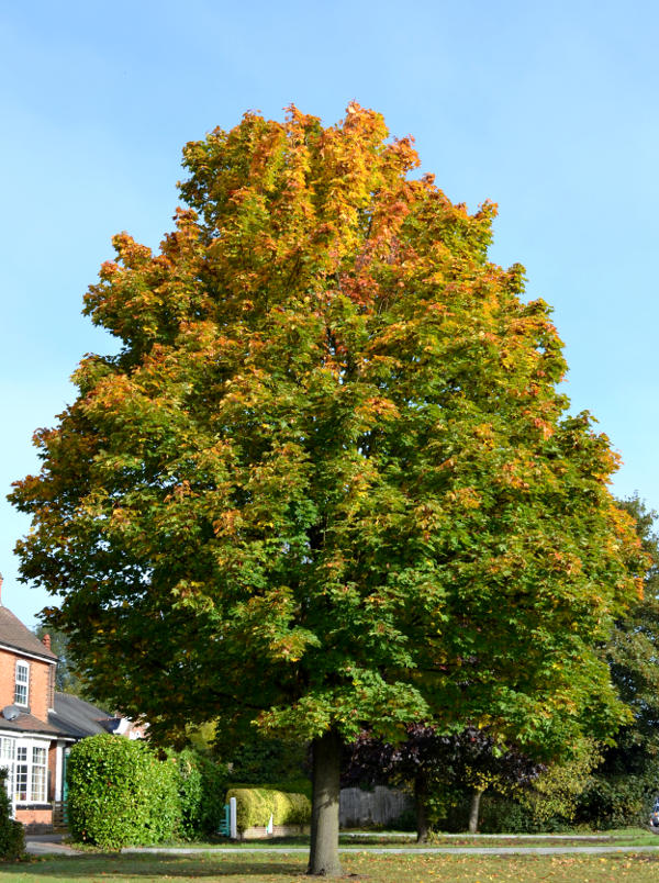Autumn: Leaves on the turn on Pershore Road in Selly Park