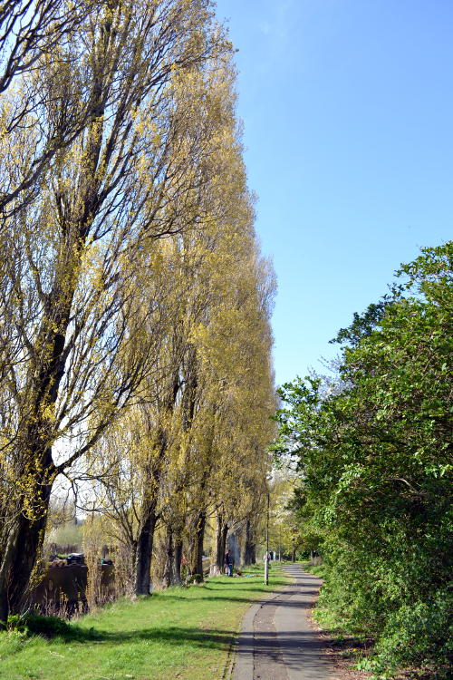 Trees next to the Birmingham and Worcester Canal