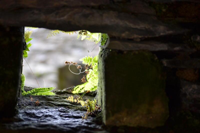 A hole in brickwork with ferns behind