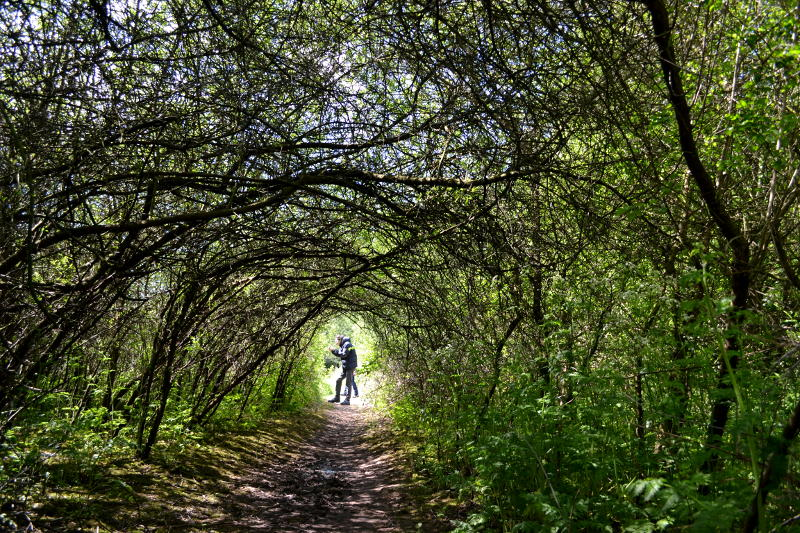 A tunnel of branches by the River Rea