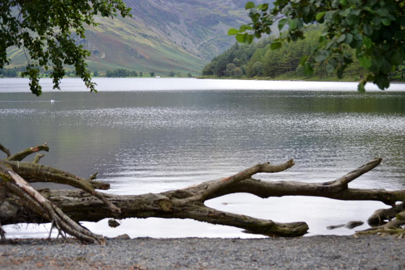 Buttermere with a fallen tree in the foreground