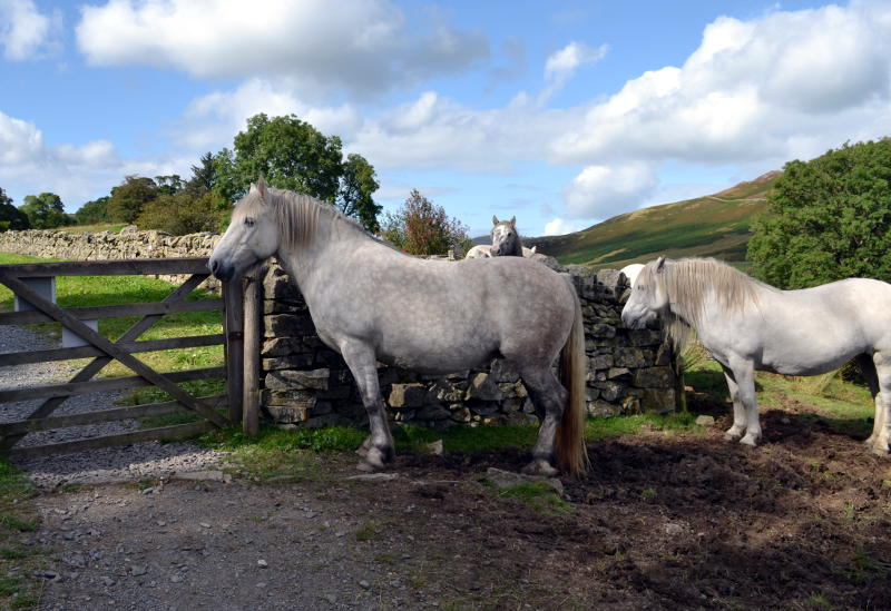 Horses by a gate in a field