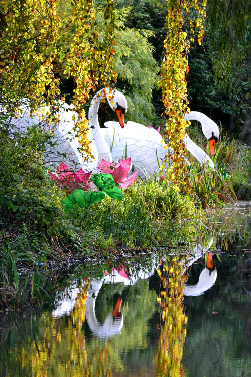 Giant model swans reflected in a pond