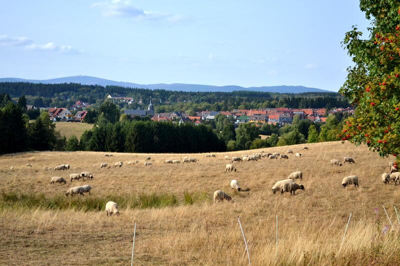 A view across fields