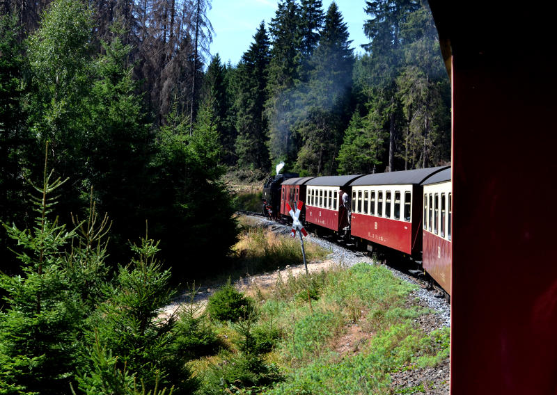 View along a steam train as it winds through a forest