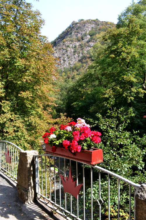 A flower box on a metal railing with a tree-lined gorge in the background