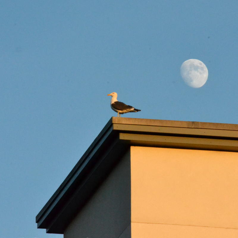 A bird perched on a high roof with the Moon behind its head