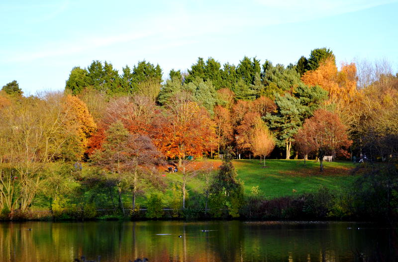 Autumn trees on the far bank of a lake