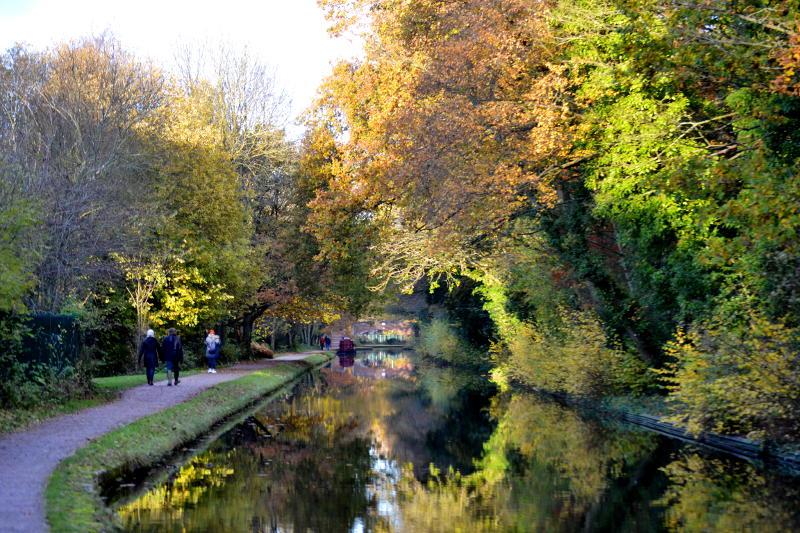 Autumn trees alongside the canal