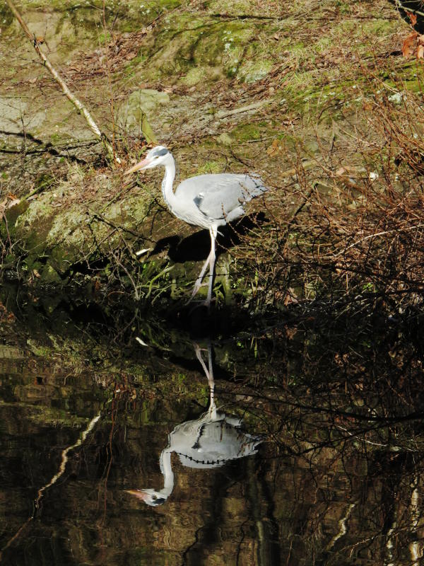 A heron stands on the far bank of the canal, reflected in the water