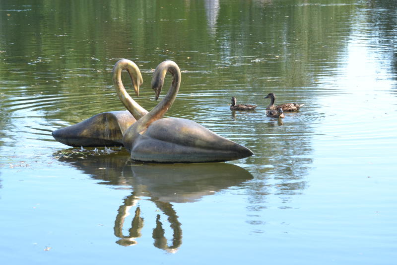Sculptured swans and real ducks