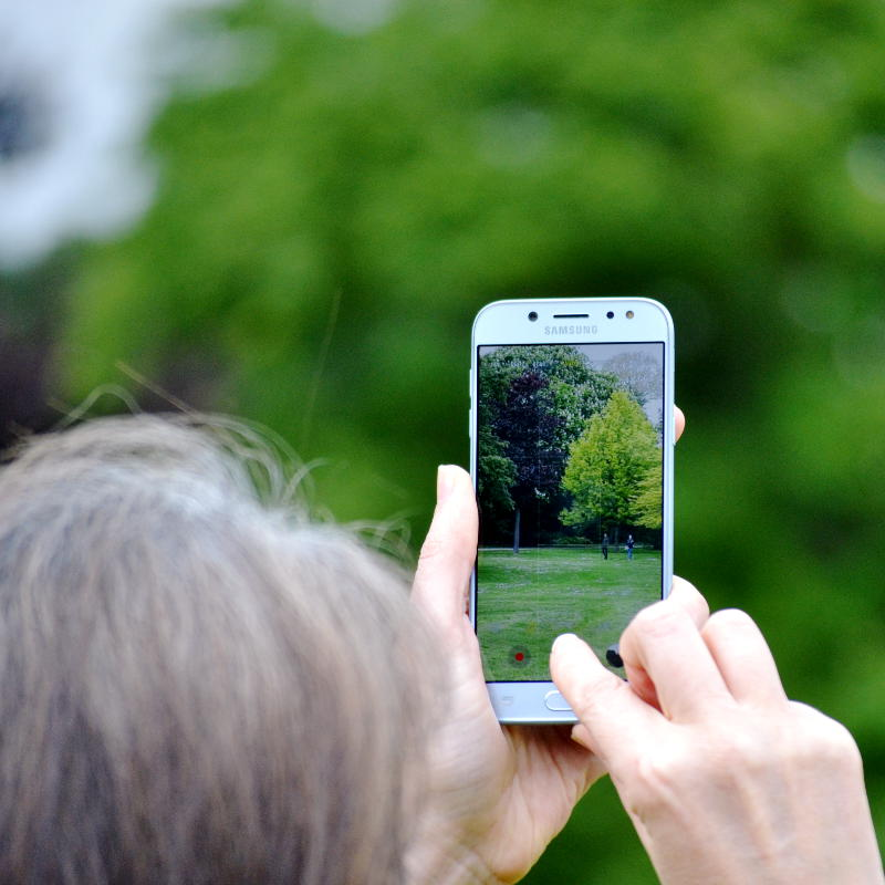Photo of trees being taken on a mobile phone