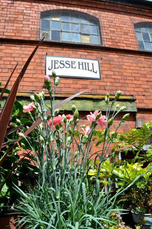 Flowering plants in front of a Jesse Hill sign