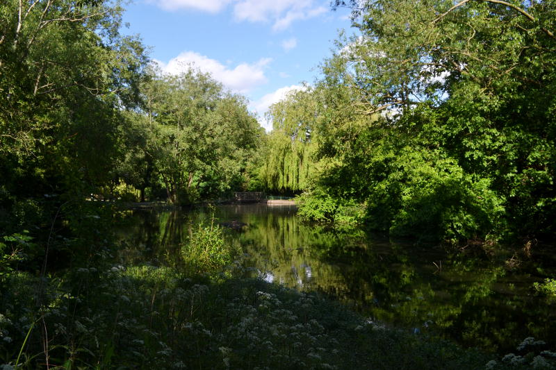 A large pond surrounded by trees