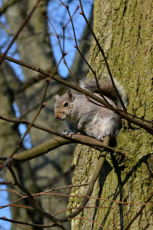 A squirrel up a tree