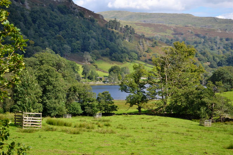 Looking down on Rydal Water surrounded by grass and wooded hills