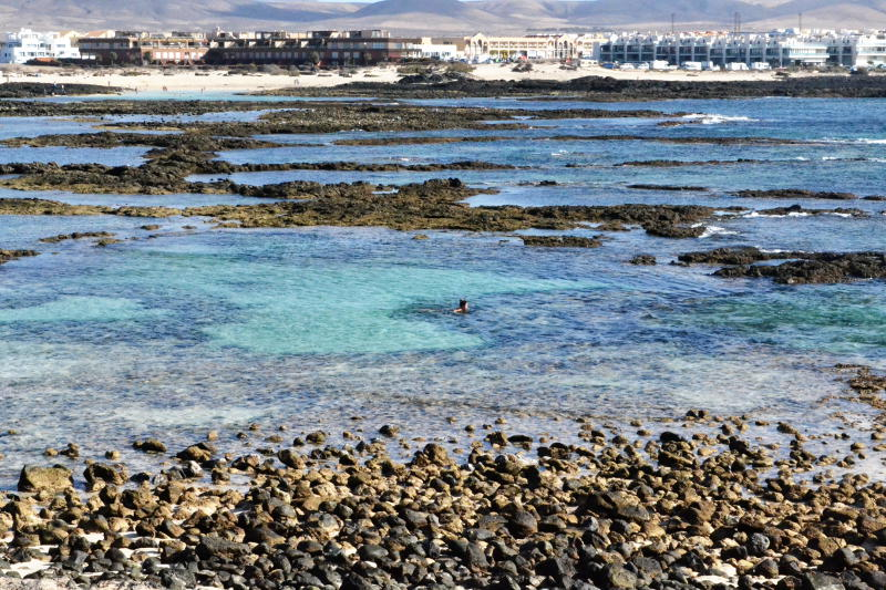 A distant swimmer among shallow rock pools