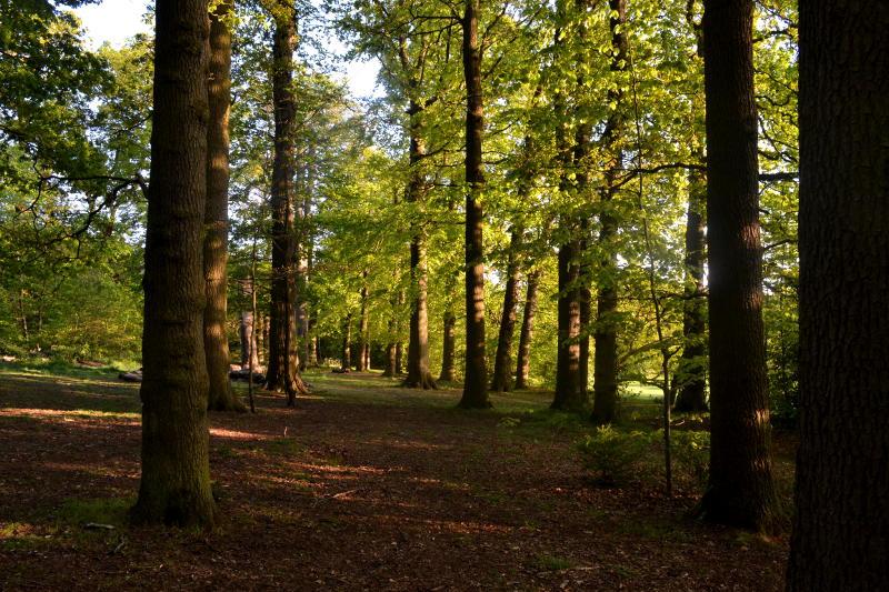 Woodland in sunshine