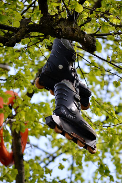 A pair of roller blades hanging in a tree