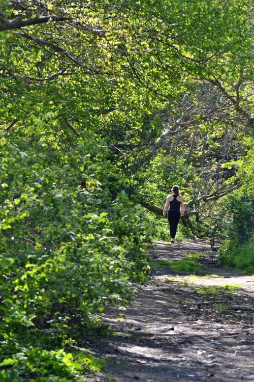 A walker on a path through woodland